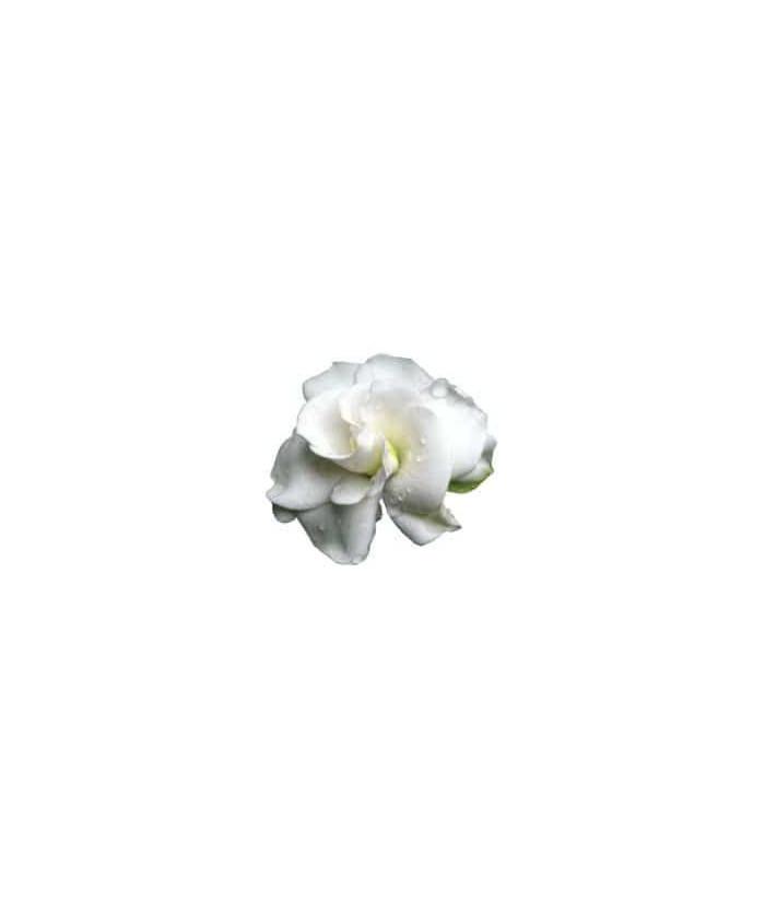 Ambientador Mikado Gardenia Jasminoide